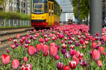 Wiosna w mieście, kwiaty w mieście, zieleń miejska