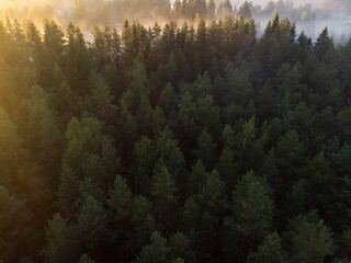 White fog over a green forest in the taiga, top view