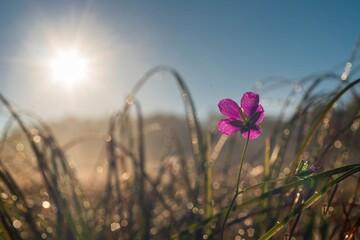 Poranek na łące rozświetlonej delikatnym słońcem