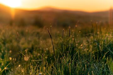 Łąka o wschodzie słońca