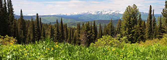 Panoramic view of mountain taiga landscape, summer