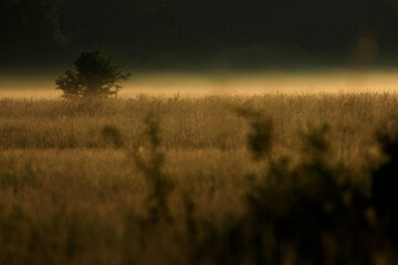 krajobraz polany z mgłą o wschodzie