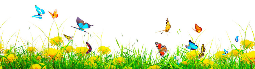 Beautiful nature view of butterfly on blurred background in garden.