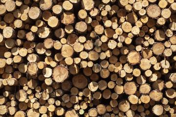 drewniane pale sosnowe