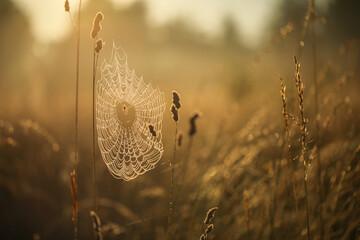 Sieć pajęcza