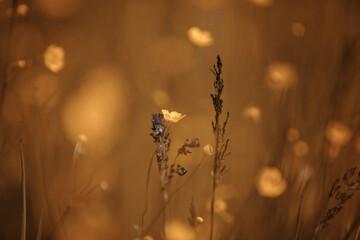 Letnia łąka z żółtymi kwiatkami
