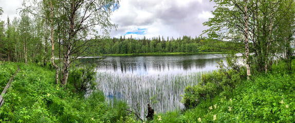Picturesque wide panorama from the green shore overgrown with grass, bushes to a quiet lake and taiga on the other side. north. Karelia. Coniferous forest on the horizon. Place to relax and go fishing