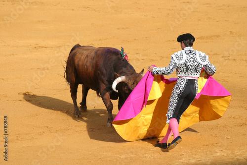 atakujący byk.
