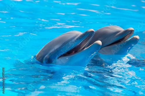 szczęśliwe delfiny