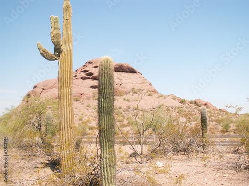 sonoran desert, arizona,usa