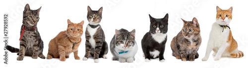 Grupa kotów