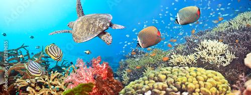 Podwodna panorama