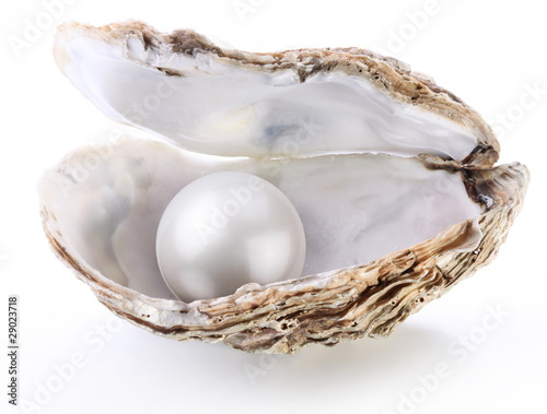 Image of a white pearl in a shell on a white background.
