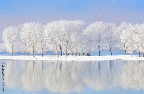drzewa zimowe pokryte szronem