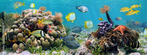 Podwodna panorama w rafie koralowej z kolorowymi rybami tropikalnymi i życiem morskim