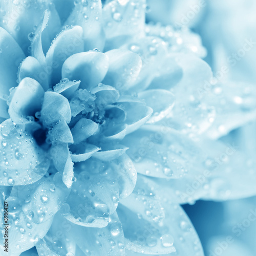 Beautiful blue flower with drops
