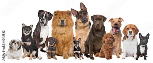 Grupa dwunastu psów