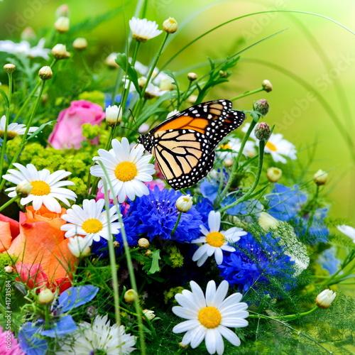 kwiat łąka