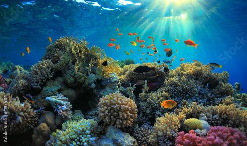 Widok podwodny