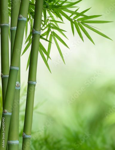bambusowe drzewo z liśćmi