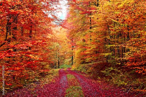 Kolorowa jesień leśna ścieżka w październiku