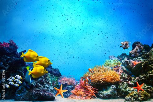 Podwodna scena. Rafa koralowa, grupy ryb w czystej wodzie oceanu
