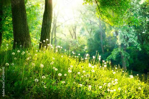 Wiosna Natura. Piękny krajobraz. Zielona trawa i drzewa