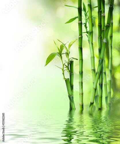 bambusowe łodygi na wodzie