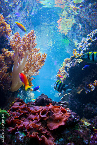 Podwodna scena z ryba, rafa koralowa