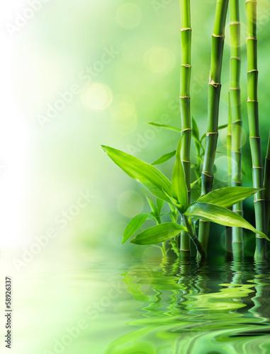 bambusowe łodygi na wodzie - zaciera się