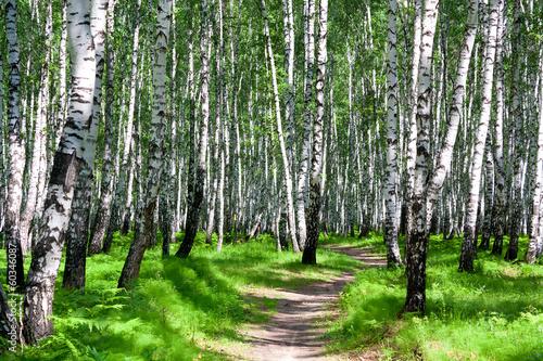 letni krajobraz z lasem i słońcem
