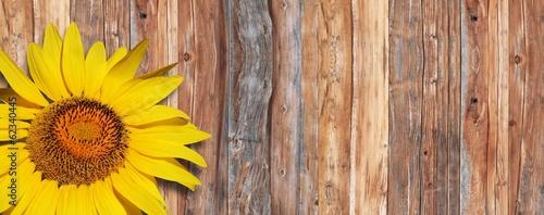Słonecznik na drewnie