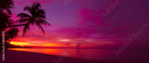 Tropikalny zachód słońca z palmą panorama sylwetka