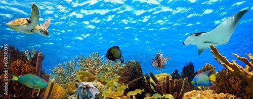 podwodna panorama tropikalnej rafy na Karaibach