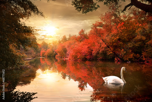 Łabędź na jesieni