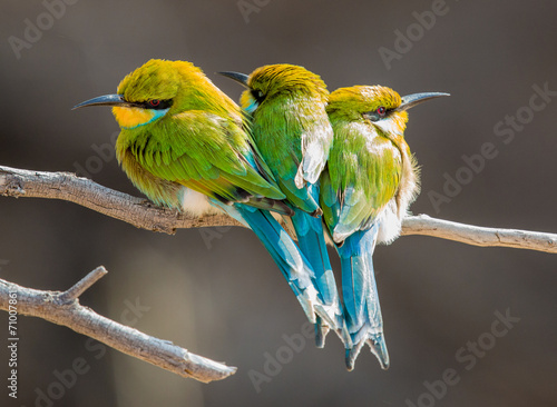 3 little colourful birds