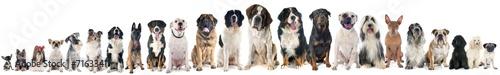 grupa psów
