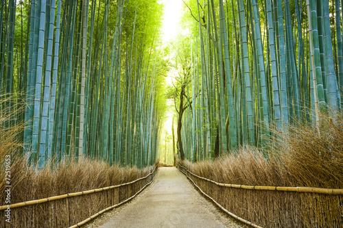 Kioto, Japonia Las bambusowy