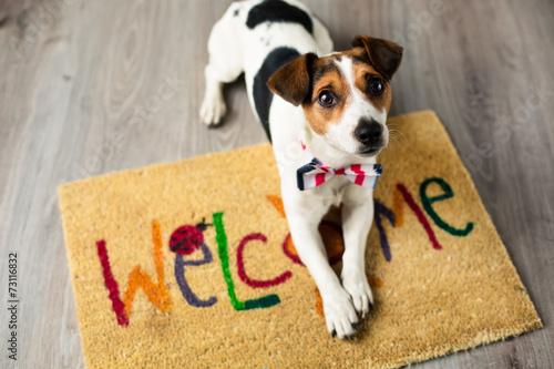 Śliczny pies pozuje na dywanie