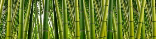 Gęsta bambusowa dżungla