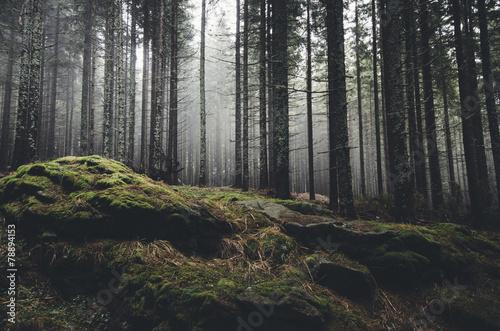 pustkowie krajobraz las z sosnami i mchem na skałach