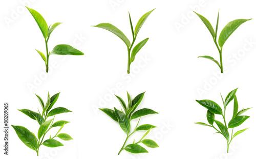 Zielona herbata liść odizolowywający na białym tle
