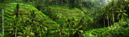 Pola ryżowe w pobliżu Ubud na Bali