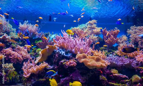 tropikalna ryba na rafie koralowej