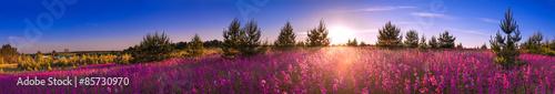 letni krajobraz z kwitnącą łąką, sunrise.panorama