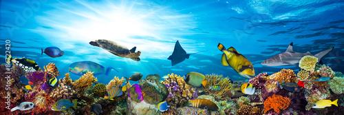 podwodne życie rafa koralowa panorama z wieloma rybami i zwierzętami morskimi