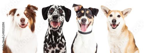 Cztery szczęśliwe zbliżenia psów