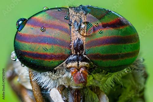 Close up view of the eyes a Tabanus abdominalis horsefly