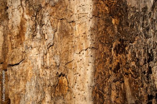 texture tree 3