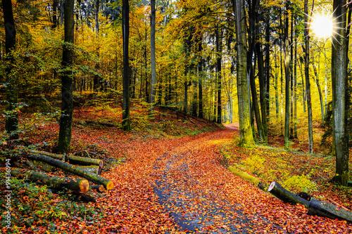 jesień w lesie bukowym